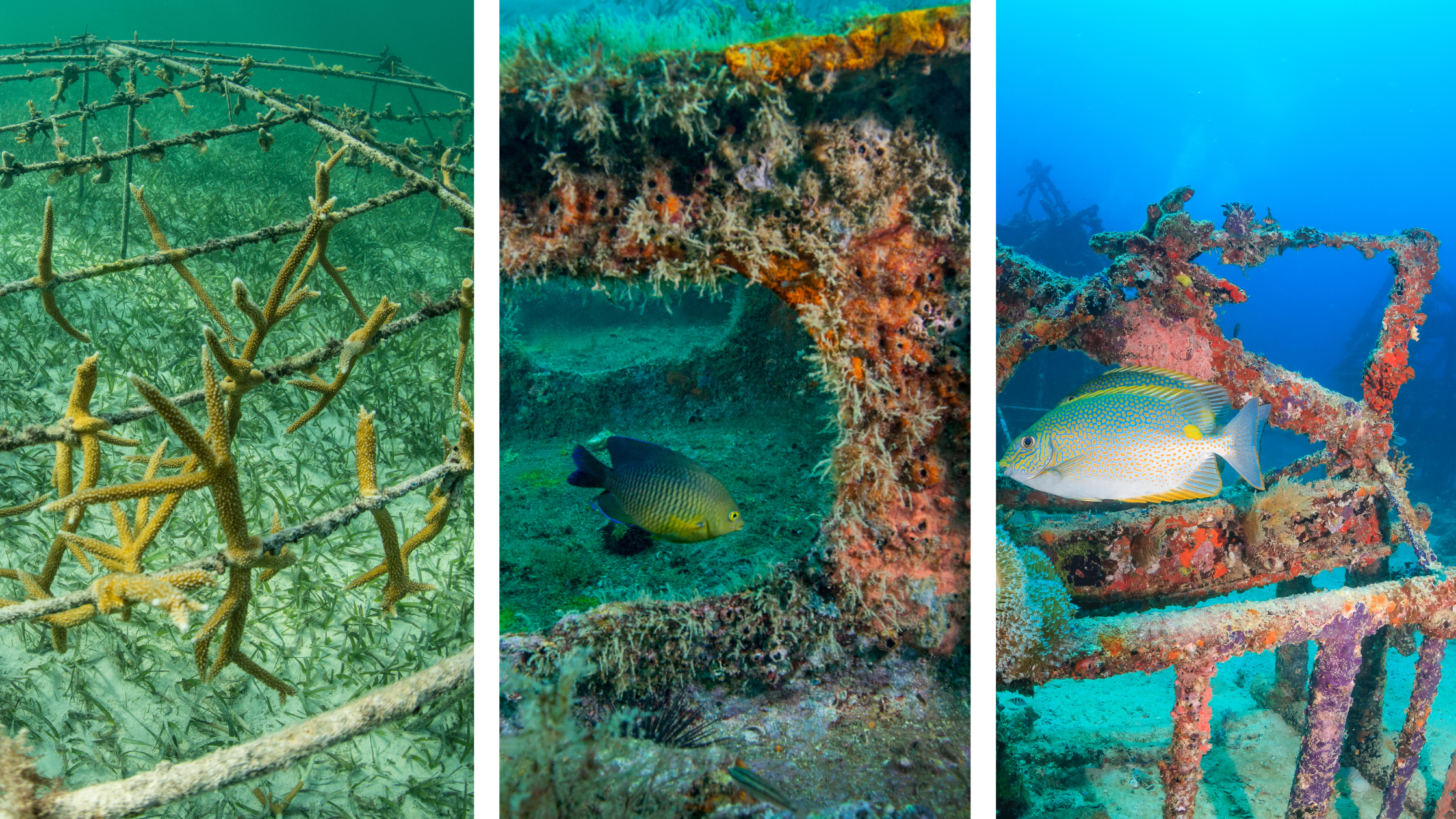 Three different types of reefs are shown side by side in a collage to demonstrate the wide variety of requests a contractor might get for building artificial reefs.