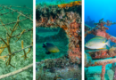 Building Artificial Reefs: What to Expect